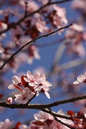 Flores de primavera  Foto de archivo - 6774820