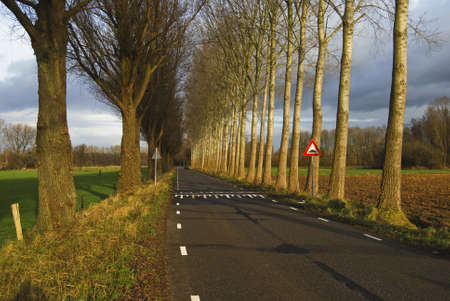 poplars: road with poplars in the eastern part of Holland Stock Photo