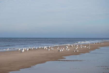 sandbank: sandbank with seagulls Stock Photo