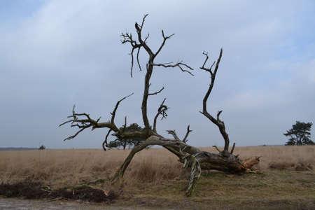 toter baum: toter Baum in Heide in Naturpark Lizenzfreie Bilder