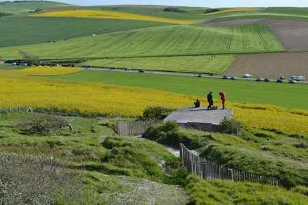 rapeseed: Walking through rapeseed fields in Northern France