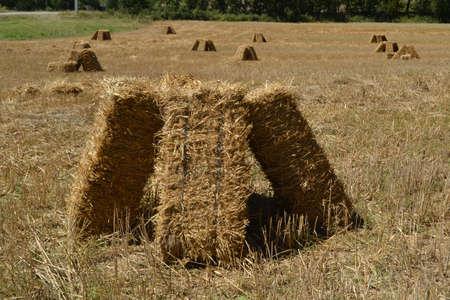 bales: Corn bales on a fields Stock Photo