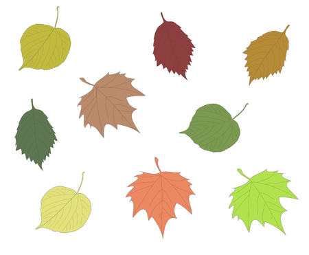 Colorful autumn leaves collection in isolated background. Linden maple alder leaf set