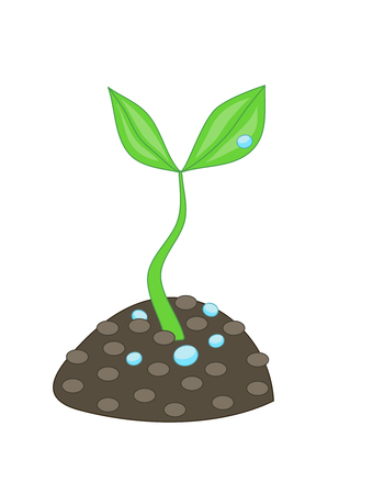Growing small green plant with two leaves and water drops from soil dirt. Concept of growth