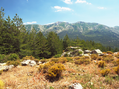 scenery of high green mountainn meadow on corsician alpes with pine trees, green bushes rocks boulders and blue sky background Stock Photo