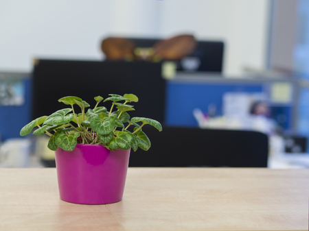 green plant in pink flowerpot on office desk with defocused open office background Stock Photo