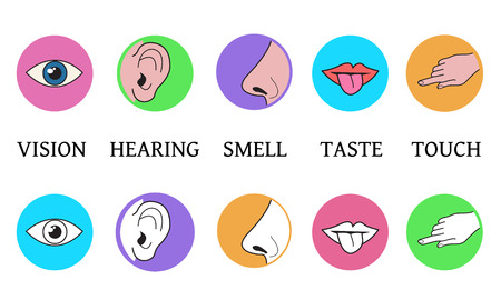 Five senses methods of perception, taste vision touch smell hearing vector icons in color circles simple black and white outline and colored illustration
