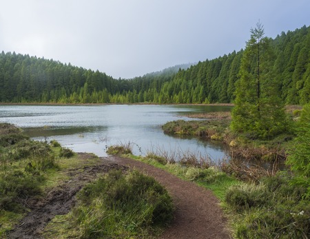 Banks of shallow volcanic lake Lagoa Rasa surrounded by lush green forest, foggy day, the island of Sao Miguel, Azores, Portugal
