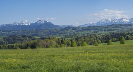 Beautiful panoramic spring rural mountain landscape in the Bavarian Alps with blooming meadow and snow covered mountain peaks, Alpen massif in the background. Bavaria, Germany Stock Photo