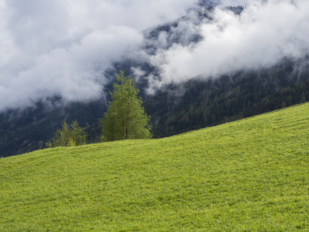 Spring lush green meadow and trees, forest Idyllic misty mountain landscape. white clouds and fog.