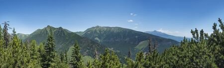 View from tatra mountain trail on Baranec to Western Tatra mountains or Rohace panorama and high tatras. Pine trees and coniferous forest hills, blue sky. Tatra mountain in summer, Slovakia.