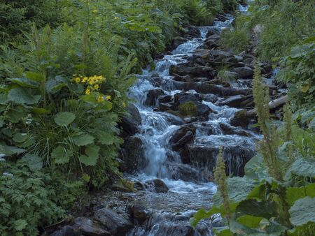 Beautiful mountain stream cascade flows between lush green grass, moss, fern leaves and yellow flowers, Western Tatras mountains, Rohace Slovakia, summer Imagens