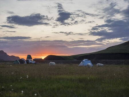 Beautiful red purple sunrise in Landmannalaugar mountain at camp site area with grazing sheep and tents. Fjallabak Nature Reserve in Highlands region of Iceland.
