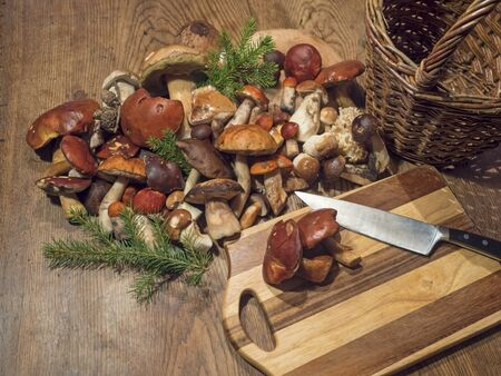 Assorted edible mushroom Boletus close up on wooden rustic table with wicker basket, cutting board, knife and green spruce tree twig. Cooking and preparing delicious organic mushroom food. Autumn Cep Mushrooms. Mushrooms Picking concept