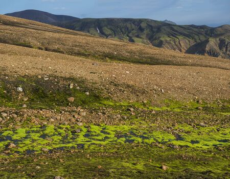 Lush vivid green wet moss with Colorful Rhyolit Landmannalaugar mountain at Fjallabak Nature Reserve in Highlands of Iceland Imagens