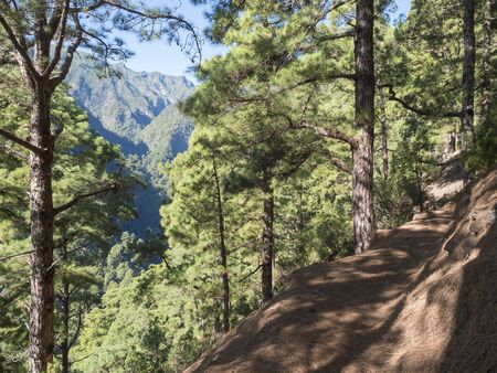 Lanscape od hiking trail Barranco de la Madera from Las Nieves with pine tree forest and path along ravine with steep green mountains, La Palma Island, Canary Islands, Spain