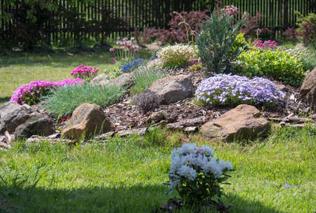 spring garden with beautiful rock garden in full bloom with pink Phlox, Armeria maritima, sea thrift, Bergenia or elephants ears, carnation and other colorful blooming flowers.