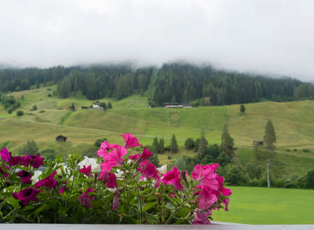 Beautiful potted pink and white geranium flowers on a balcony overlooking a valley in Neustift im Stubaital in Tirol Alps, Austria. Foggy forest and green meadow background. Zdjęcie Seryjne