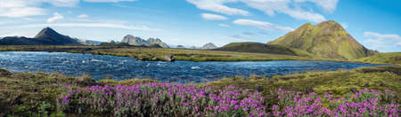 Beautiful wide panoramic Icelandic landscape with wild pink flowers, blue glacier river and green mountains. Blue sky background. in area of Fjallabak Nature Reserve on Laugavegur trek, Iceland