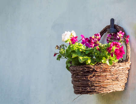 white and red geranium flowers in brown wicker basket, flower pot hanging on white wall, copy space, selective focus