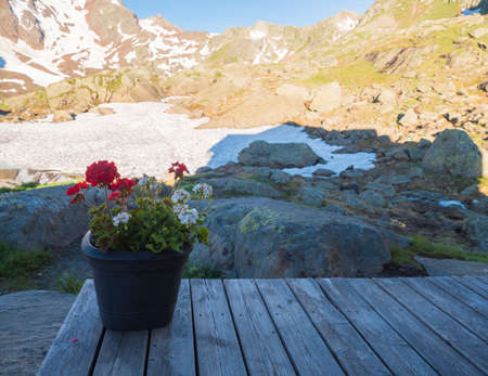 Pot of red and white geranium flowers on wooden table overlooking snow-capped moutain peaks at hiking trail, Stubai, Tyrol Alps, Austria, sunny summer morning Archivio Fotografico