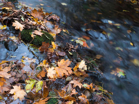 Colorful fallen autumnal leaves in long exposure water of forest stream creek in autumn with stones and moss in luzicke hory lusitian mountain in czech republic Archivio Fotografico