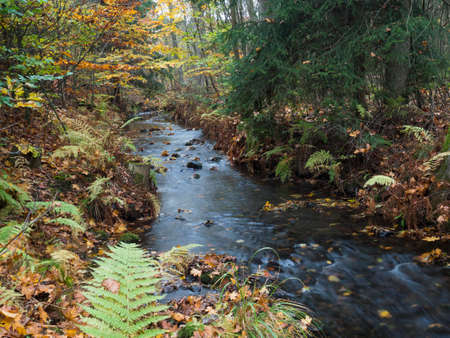 Long exposure magic forest stream cascade creek in autumn with stones, moss, ferns and colorful fallen leaves and trees in luzicke hory lusitian mountain in czech republic