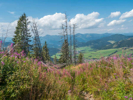view on village Liptovska Luzna with pink blooming flowers at foothills of Low Tatras mountains with mountains. Slovakia, summer sunny day, blue sky white clouds background