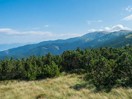 view from ridge of Low Tatras mountains, hiking trail with mountain meadow, scrub pine and grassy green hills and slopes. Slovakia, summer sunny day, blue sky background