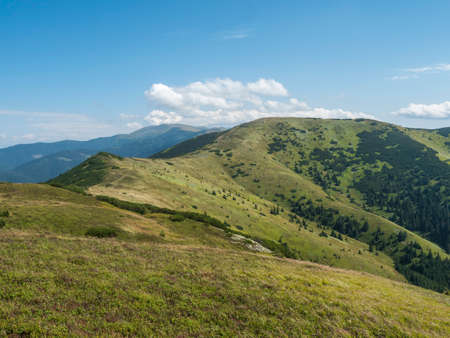 Grassy green hills and slopes at ridge of Low Tatras mountains with hiking trail footpath, mountain meadow, and pine scrub, Slovakia, summer sunny day, blue sky background
