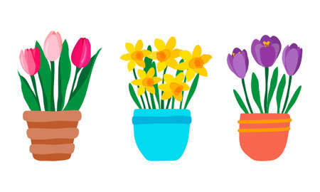 Set of spring garden flowers in pot. Pink Tulips, purple crocuses and yellow daffodils. Cute hand drawn colorful potted plants isolated on white background. Vector illustration in flat style