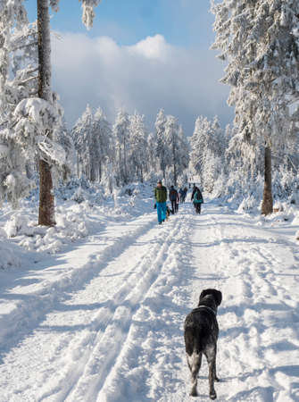 Czech Republic, Brdy mountains, January 9, 2021: Group of people and black gray hunting dog on a walk at snowy road in winter forest with snow covered spruce trees