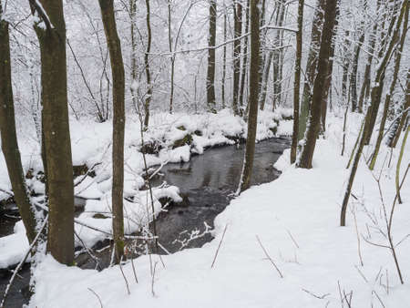 Snow covered forest water stream, creek with trees, branches and stones, idyllic winter landscape in Luzicke hory, Lusatian Mountains, Czech Republic, snowfall