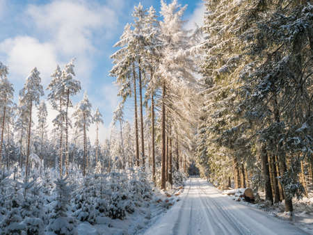 Snowy road in winter forest with snow covered spruce trees Brdy Mountains, Hills in central Czech Republic, sunny day Stok Fotoğraf