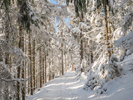 Snowy road in winter forest with snow covered spruce trees and walking man figure. Brdy Mountains, Hills in central Czech Republic, sunny day