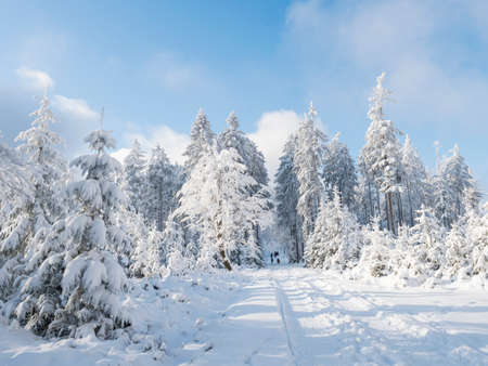 Snowy road in winter forest with snow covered spruce trees and group of people in distance. Brdy Mountains, Hills in central Czech Republic, sunny day Stok Fotoğraf