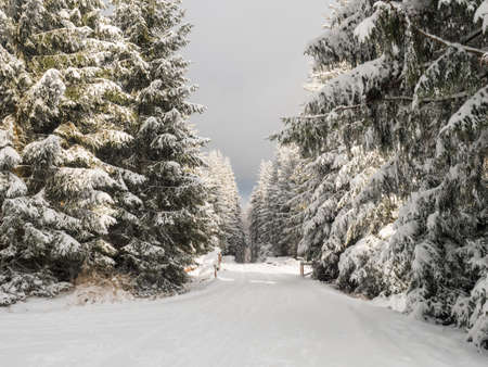 Snowy road in winter forest with snow covered spruce trees Brdy Mountains, Hills in central Czech Republic, golden hour Stok Fotoğraf