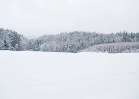 White snow covered field with frozen spruce and broadleaf trees on horizon and white sky background. Snowy forest landscape. Winter background concept. Stok Fotoğraf