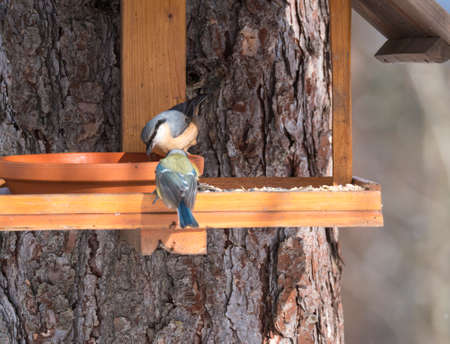 Close up Wood Nuthatch and Eurasian blue tit, Cyanistes caeruleus bird perched on the bird feeder table with sunflower seed. Bird feeding concept. Selective focus. Stok Fotoğraf