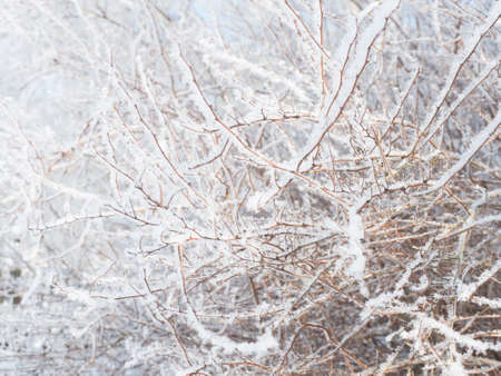 Snow-covered hoarfrost bush branches and twig, selective focus. Winter snowy pattern, background or frame, copy space