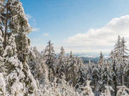 View of winter landscape with fields downhill over snowy spruce tree forest with snow covered conifers. Brdy Mountains, Hills in central Czech Republic, sunny day