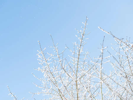 Snow-covered hoarfrost tree branches over clear blue sky background. Winter snowy background or frame, copy space
