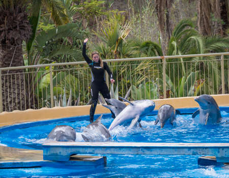 San Bartolome de Tirajana, Gran Canaria, Canary Islands, Spain December 18, 2020: Dolphins show at Palmitos Park. Trained dolphin performing. Gran Canaria, Spain