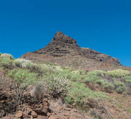 View of rocky mountain peak at Barranco de Guigui Grande. Arid subtropical landscape of ravine with cacti and succulent plants. West of Gran Canaria, Canary Islands, Spain