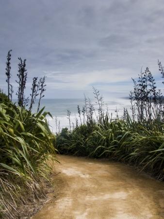 Muriwai beach access
