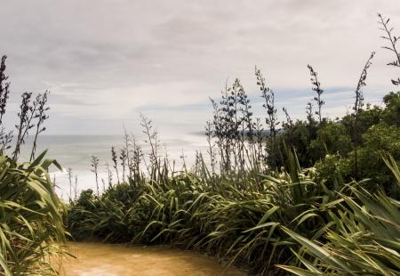 West Coast beach access, Muriwai beach, New Zealand Stock Photo