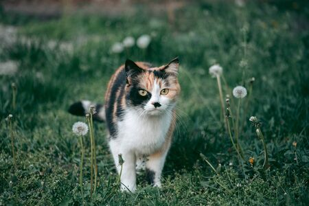 Tricolor cat surrounded by nature looking at the camera Imagens