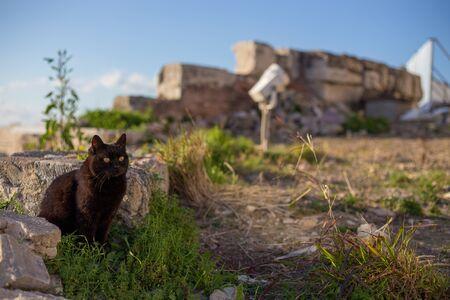 Fluffy cat basking in the sun in summer