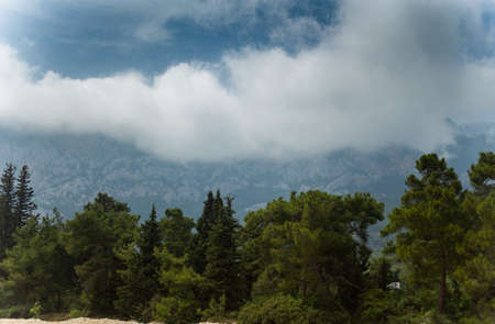 High mountains and green pine forest in the afternoon in summer 版權商用圖片