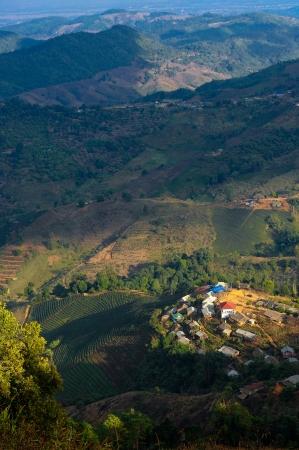 teepflanze: Vogelperspektive der Tee-Pflanze in Thailand